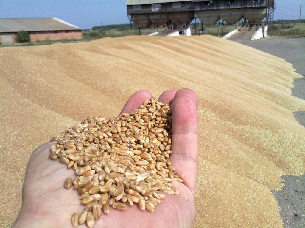 Чем обрабатывают зерно на элеваторах бампер задний фольксваген транспортер